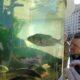 Ученые: Рыбы умеют распознавать человеческие лица