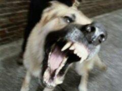 В Междуреченске собака напала на девочку, ехавшую на велосипеде