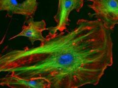 Ученые нашли в клеточном ядре альтернативный источник энергии