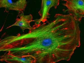 ядро клетки энергия