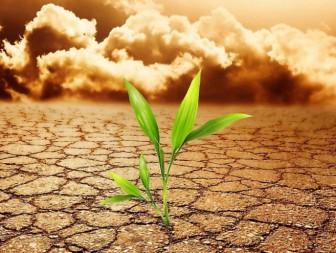 растение стресс