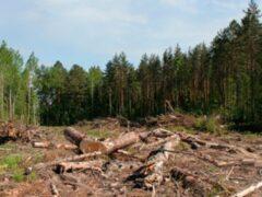 В Приангарье нечестные на руку дельцы пытаются сорвать первый честный аукцион по лесу