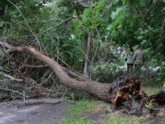 На востоке Москвы упавшее дерево придавило женщину