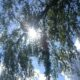 Лето в Беларуси синоптики обещают теплее обычного