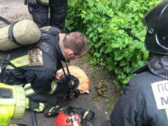 В Петербурге пожарные спасли кота из горящей квартиры на улице Обручевых