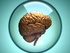 Учёные вырастили в лаборатории новый мини-мозг