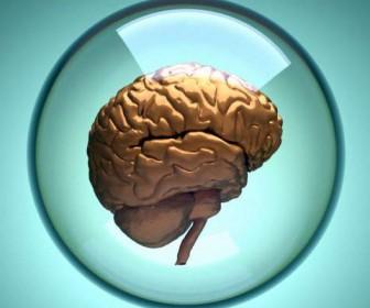 мини-мозг
