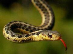В Елабуге 11-летняя девочка попала в реанимацию после укуса змеи