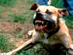 В Барнауле стаффорд покусал собаку и двух человек