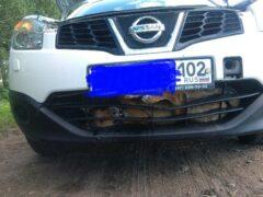 Под Уфой собака застряла в бампере автомобиля после ДТП
