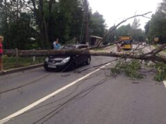 Упавшее дерево перекрыло движение по Приморскому шоссе