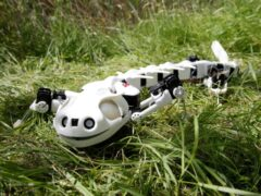 Ученые создали робота, имитирующего движения позвоночных