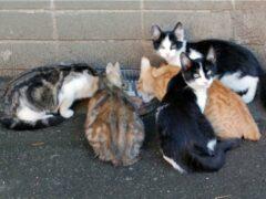 В Омске жители дома замуровали в подвале бездомных кошек