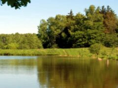 В пруду в Ленобласти нашли тело 5-летней девочки