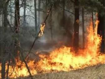 пожар деревья огонь