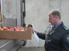 50 тонн «санкционки» нашли на продуктовой базе в Петербурге