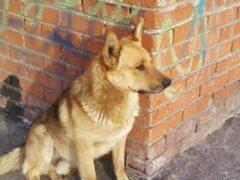 В Джанкое двое живодеров пытались съесть собаку