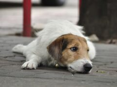 В Брянске возбуждено уголовное дело об отравлении собак