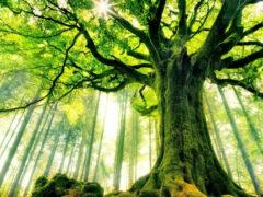 Ученые: Деревья имеют интеллект и общаются друг с другом