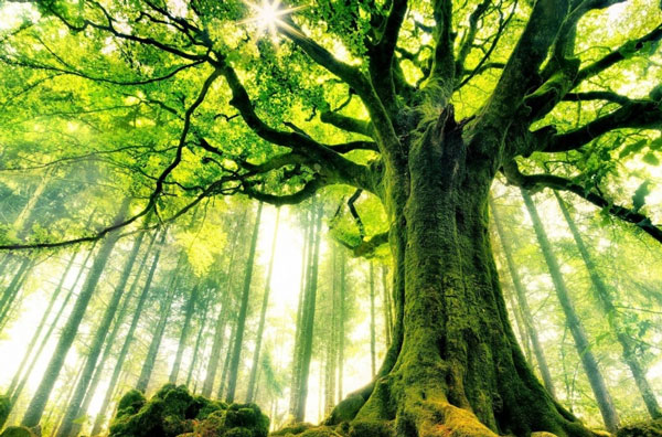 Ученые: Деревья разговаривают друг сдругом