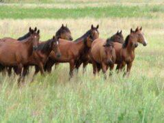В Ростовской области пенсионер похитил пасущихся лошадей