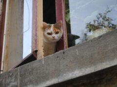 В Челябинске живодер выбросил из окна многоэтажки котов своей супруги