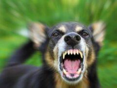 Жительница Ставрополя попала в нейрохирургию после укусов своей собаки