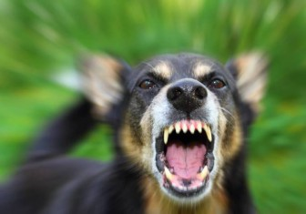 собака бешеная