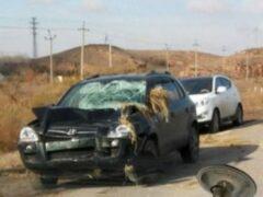 Под Астраханью выпавший из грузовика стог сена повредил внедорожник