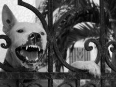 Петербург: На проспекте Культуры 7-летнюю девочку покусали собаки