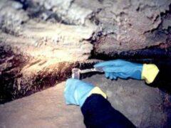 Ученые нашли бактерию возрастом более 2,5 млрд лет