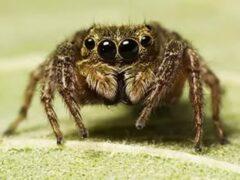 Ученые: Пауки слышат людей на значительном расстоянии