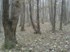 В Ставрополе нашли пропавшего пенсионера, который заблудился в лесу