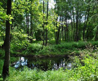 __земля природа лес