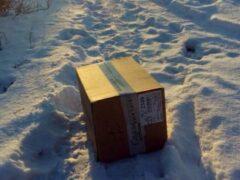Под Волгоградом живодеры выбросили запечатанного в коробке котенка на мороз