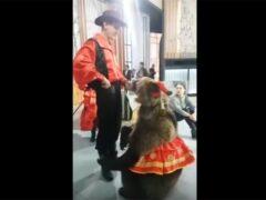 Медведь напал на девушку на съемках программы «Про любовь» в Москве