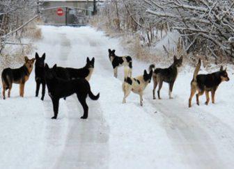 собаки бродячие