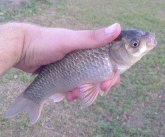 __рыба улов