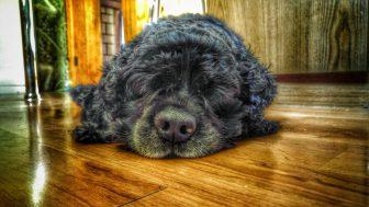 __собака спит