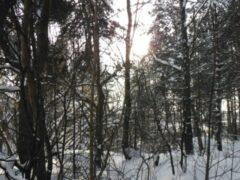 Туристку, заблудившуюся на Красноярских «Столбах», нашли спасатели