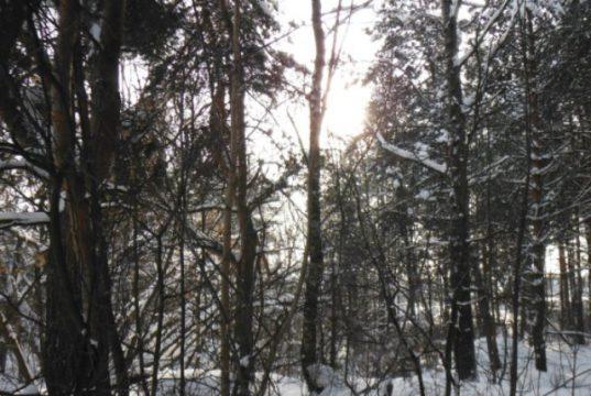 __лес зима