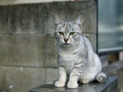 Крушением стен в квартире завершилась операция по спасению кота в Новочеркасске