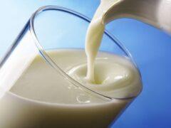 Ученые: взрослые люди не должны пить молоко