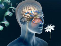 Ученые: Потеря обоняния увеличивает риск преждевременной смерти