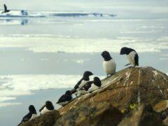 Ученые: При стрессе птицы больше заботятся о себе, чем о потомстве