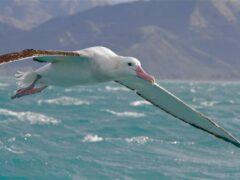 Орнитологи посчитают из космоса представителей редкого вида птиц