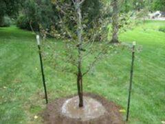 В Тульской области 80-летний пенсионер украл деревья у своей соседки