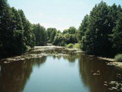 Под Воронежем из реки Усманки достали тело мужчины