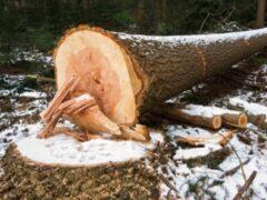 Житель Эвенкии убил напарника неудачно спиленным деревом