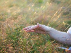 В Бурятии начали выращивать лекарственные травы для эмчи лам